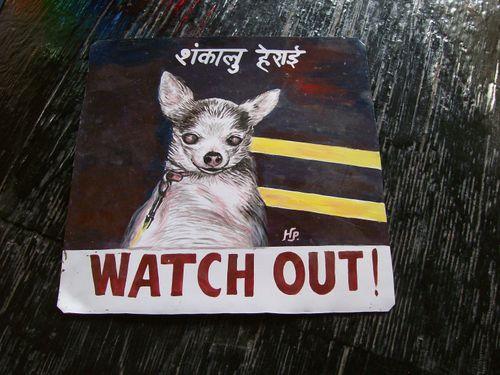 Chihuahua.HariP