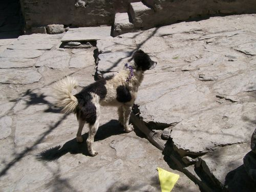 2008Dogs_255