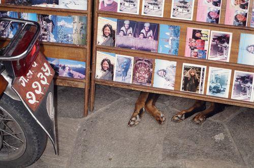 Dog sleeping in Pokhara