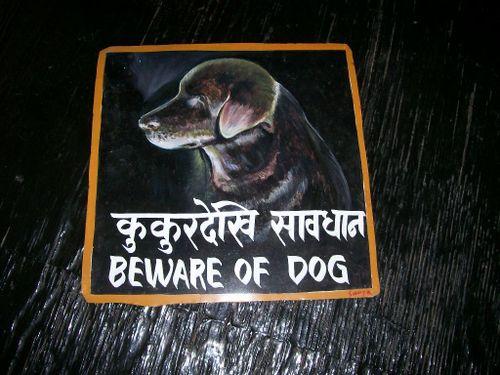 Shikari Kukur dog from Nepal