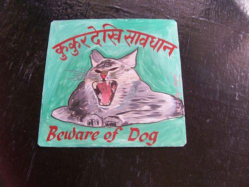 Cat.Hari_36