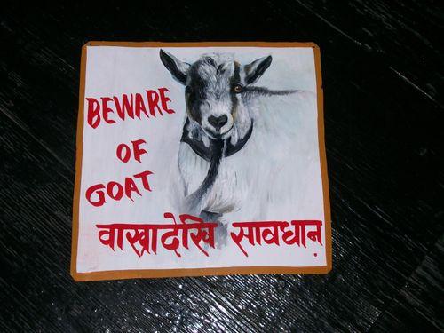 Surya.goat