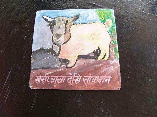 Goat.Hari_31