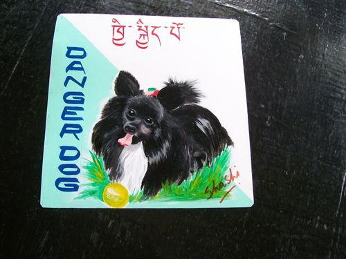 Pomeranian.Shashi