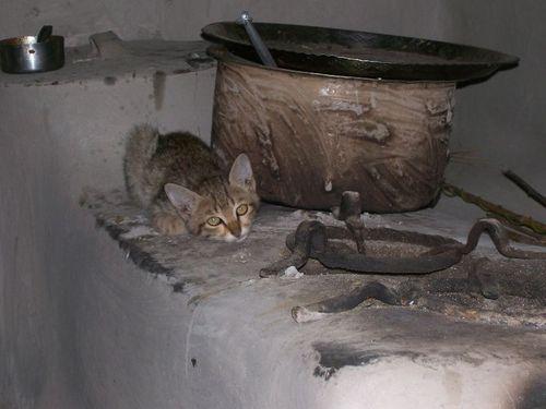 Kitten on stove