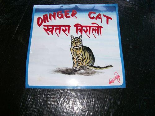 Cat.Karma_137