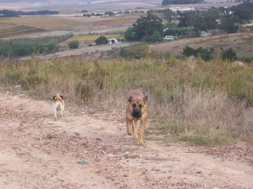 South africa_192