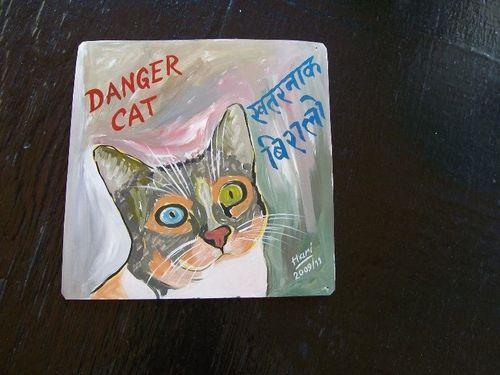 Cat.Ziggy