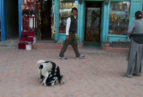 2008Dogs_5_1