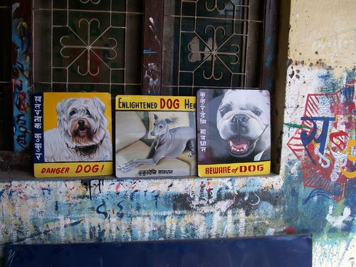 2008Dogs_486