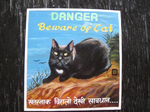 Sagar Pacheko Black Cat