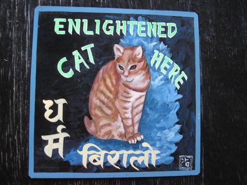Sagar Ginger Cat Tony