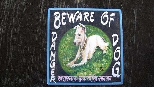Dino IG Sagar