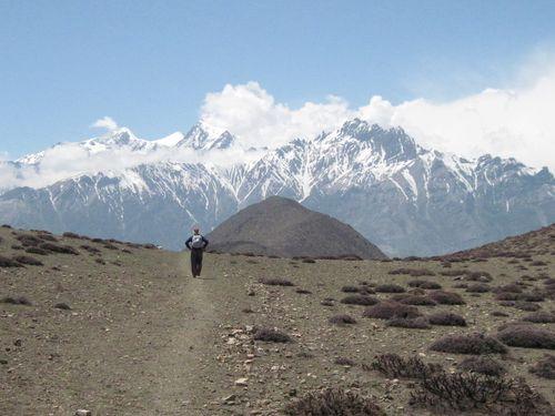 Himalayan wildflower walk