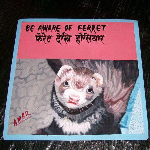 Ferret by Amar