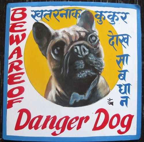 AubertFrenchBulldogSagar