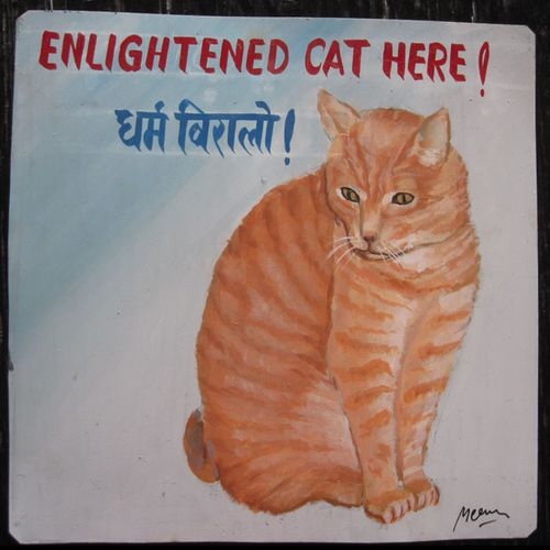 Megh Raj Ginger Cat Tony
