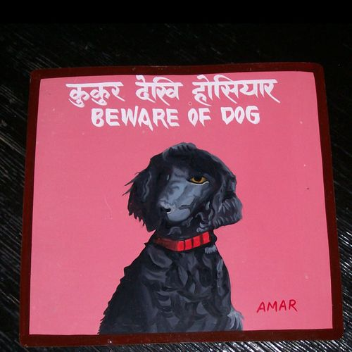 Amar.pink poodle