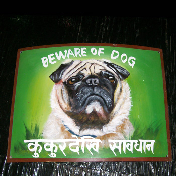 Pug on Plastic by Sagar