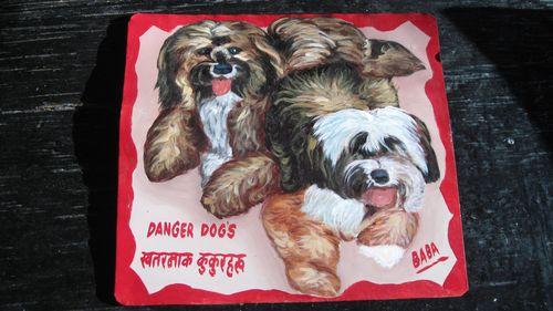 Tibetan Terriers2