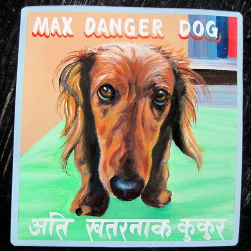 MaxLongHairedDachshund.Sagar.sq