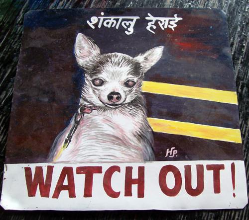 Chihuahua by Hari Prasad