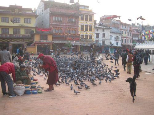 Bouda Stupa pigeons