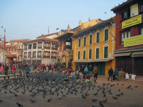 Pigeons at Boudha Stupa