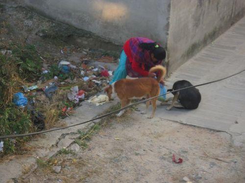 Tibetan lady feeds street dogs in Boudha