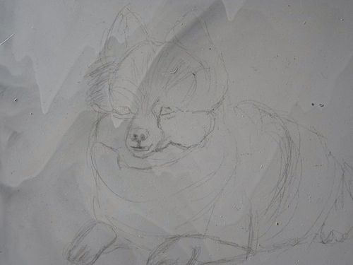 Lili the Pomeranian by Megh Raj