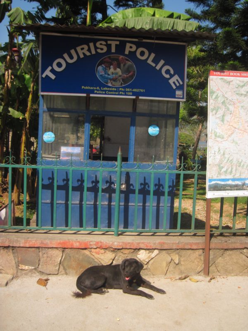 Dog outside police post in Pokhara, Nepal