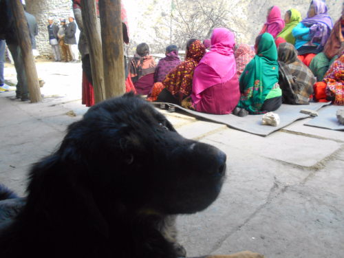 Nepali dog watches archery during Thakali Losar celebration