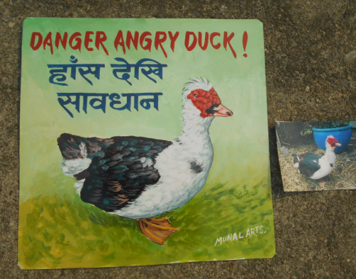 folk art Muscovy duck hand painted on metal in Nepal