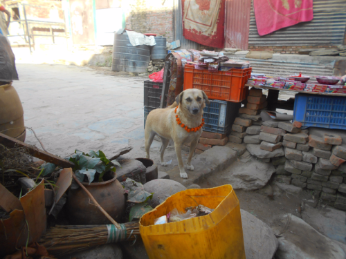 Nepal's Day of the Dog