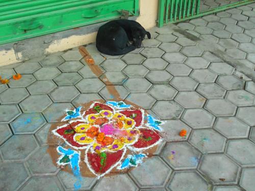 Street dog of Boudha with Rangoli