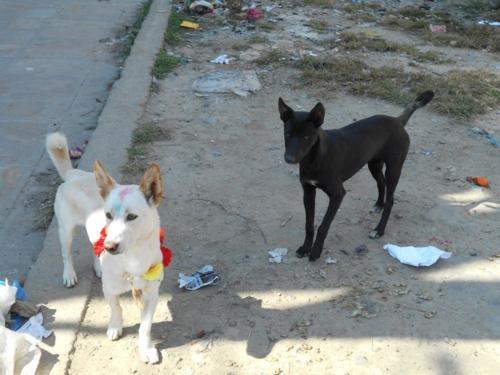 Nepali dogs play in street