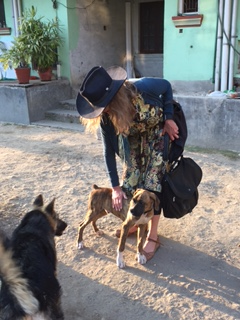 Nepali Boxer and German Shepherd