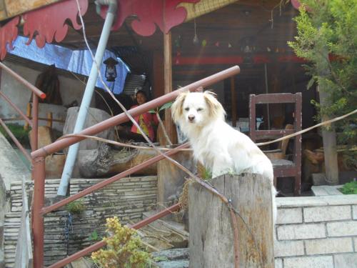 Happy dog in Lakeside, Pokhara,Nepal