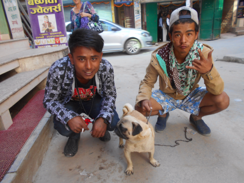 A Pug Dog in Nepal
