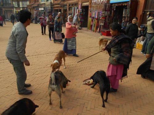 Dogs eating on Boudha Stupa
