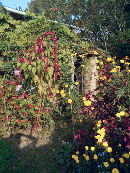 Donkey tails and marigolds in a Kathmandu garden