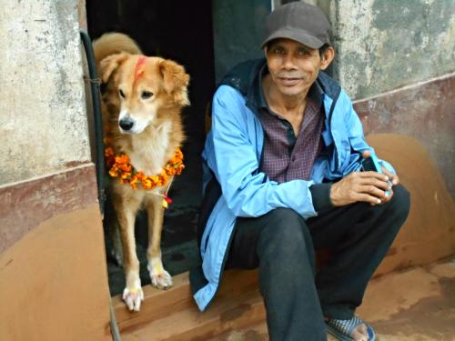 Golden Retreiver on Nepal's Day of the Dog in Kathmandu
