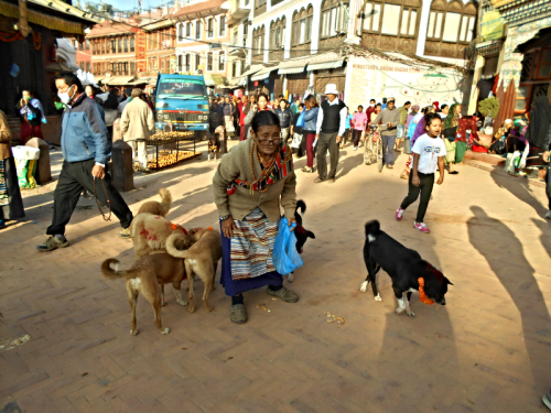 Tibetan lady feeds the dogs on the Boudha Stupa