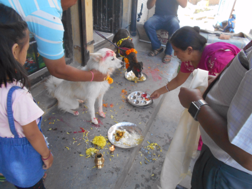 Kukor puja ceremony of Nepal's Day of the Dog