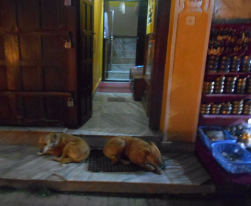 Street dogs of Boudha