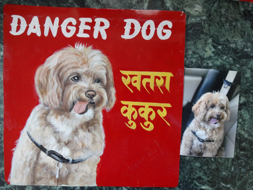 Waffle the Malti-Poo, in a folk art beware of dog sign hand painted on metal in Nepal