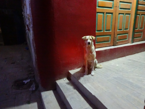 Nepali dog near a Buddhist Gompa