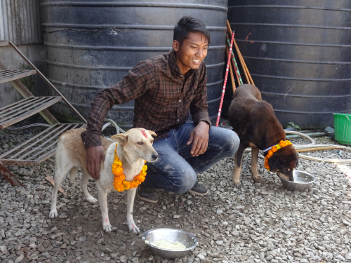 2 dogs enjoying Nepal's Day of the Dog Kukur Tihar